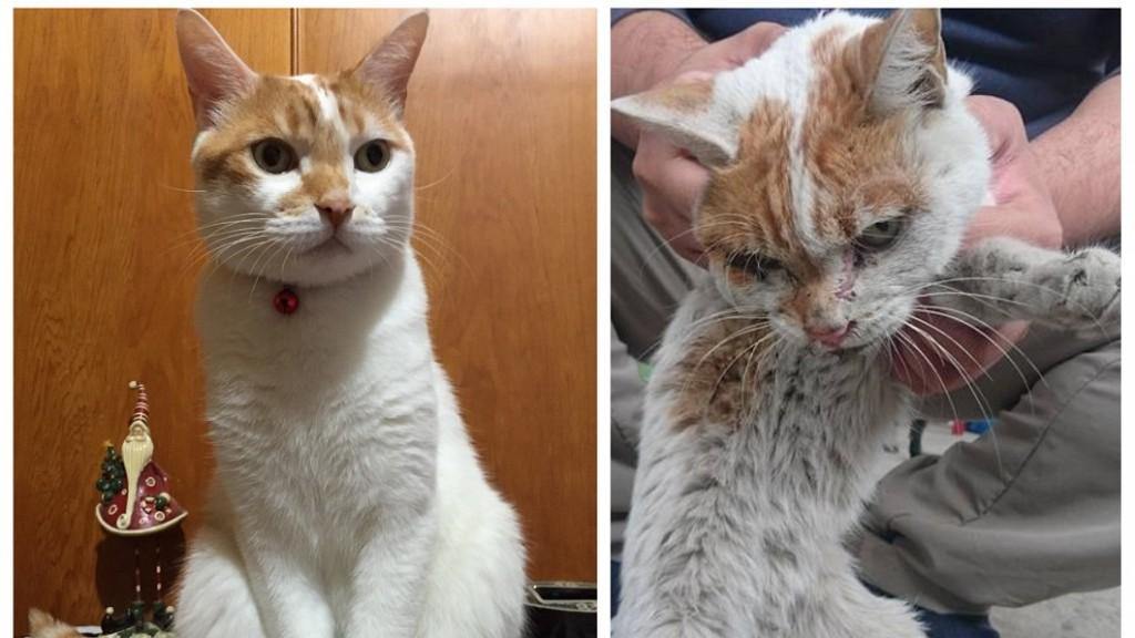 Kisah 'Abang', Kucing Yang Pergi Buat Selamanya, Kerana Terlalu Merindukan Tuannya Yang Sudah Tiada